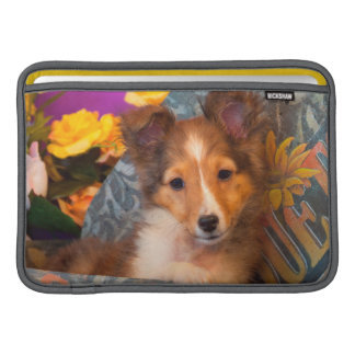 Shetland Sheepdog puppy in a hat box MacBook Sleeve