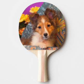 Shetland Sheepdog puppy in a hat box Ping Pong Paddle