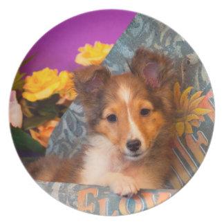 Shetland Sheepdog puppy in a hat box Plate