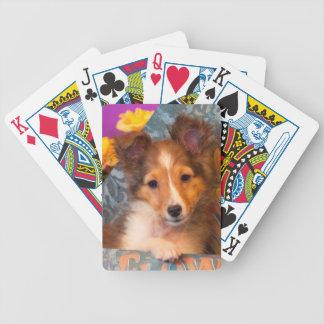 Shetland Sheepdog puppy in a hat box Poker Deck