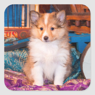 Shetland Sheepdog puppy sitting by small wagon