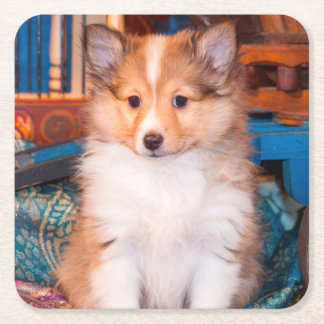 Shetland Sheepdog puppy sitting by small wagon Square Paper Coaster