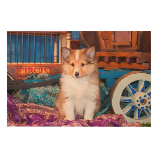 Shetland Sheepdog puppy sitting by small wagon Wood Canvas