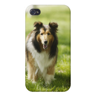 Shetland Sheepdog running on the grass Cover For iPhone 4