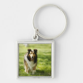 Shetland Sheepdog running on the grass Key Ring