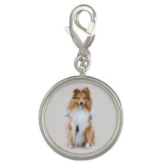 Shetland Sheepdog, sheltie cute dog photo portrait