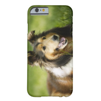 Shetland Sheepdog sitting on the grass Barely There iPhone 6 Case