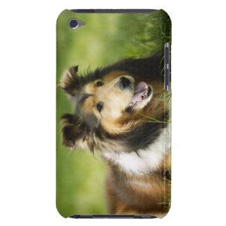 Shetland Sheepdog sitting on the grass iPod Case-Mate Case