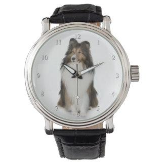 Shetland Sheepdog Watch