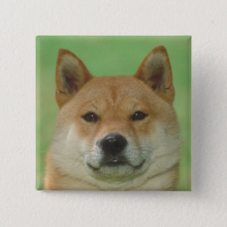 Shiba Inu 15 Cm Square Badge