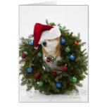 Shiba Inu dog wearing Santa hat sitting in