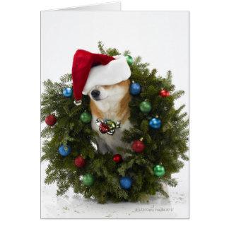Shiba Inu dog wearing Santa hat sitting in Card