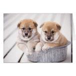 Shiba Inu puppies in aluminium tub Greeting Card