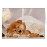 Shiba Inu puppy sleeping under a net curtain Greeting Card