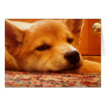 Shiba Inu Puppy TIme Out Greeting Card