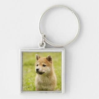 Shiba-ken puppy Silver-Colored square key ring