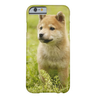 Shiba-Ken Welpe Barely There iPhone 6 Case
