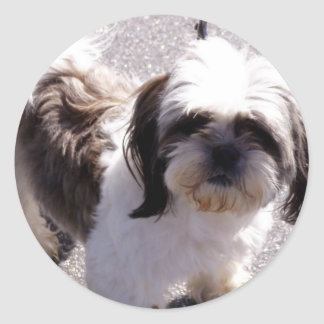 Shih Tsu Puppy Stickers