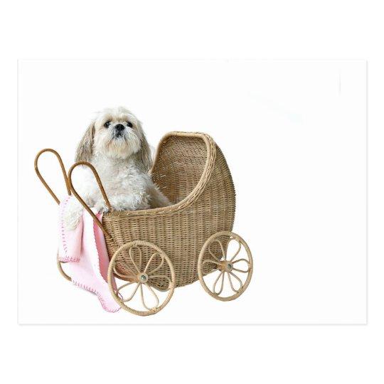 Shih Tzu baby buggy Postcard
