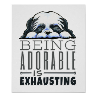 Shih Tzu Being Adorable Poster