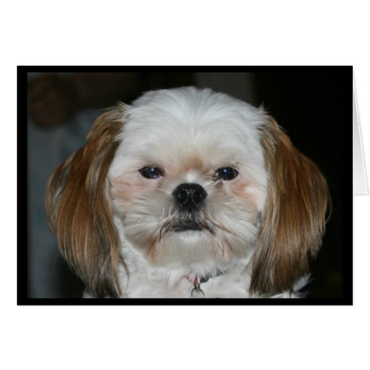 Shih Tzu Better Have A Happy Anniversary! Card