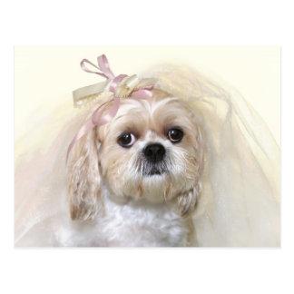 Shih Tzu Bride Postcard