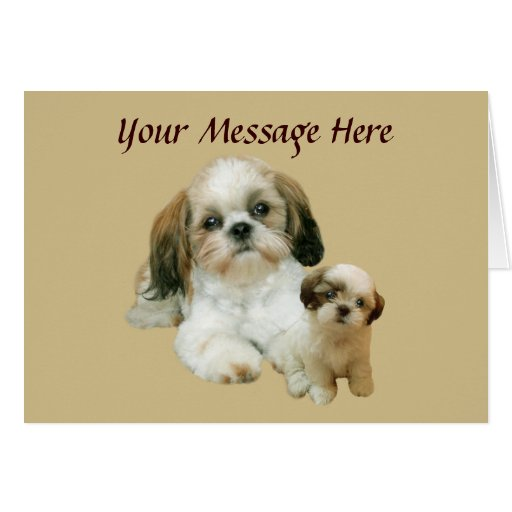 Shih Tzu Buddies Greeting Card