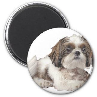 Shih Tzu Cuteness 6 Cm Round Magnet