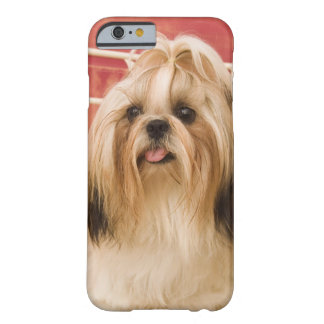 Shih-tzu dog barely there iPhone 6 case