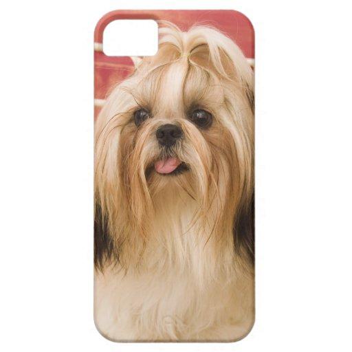 Shih-tzu dog iPhone 5 case