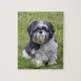 Shih Tzu dog cute beautiful photo jigsaw puzzle
