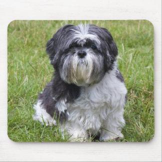 Shih Tzu dog cute beautiful photo mousepad