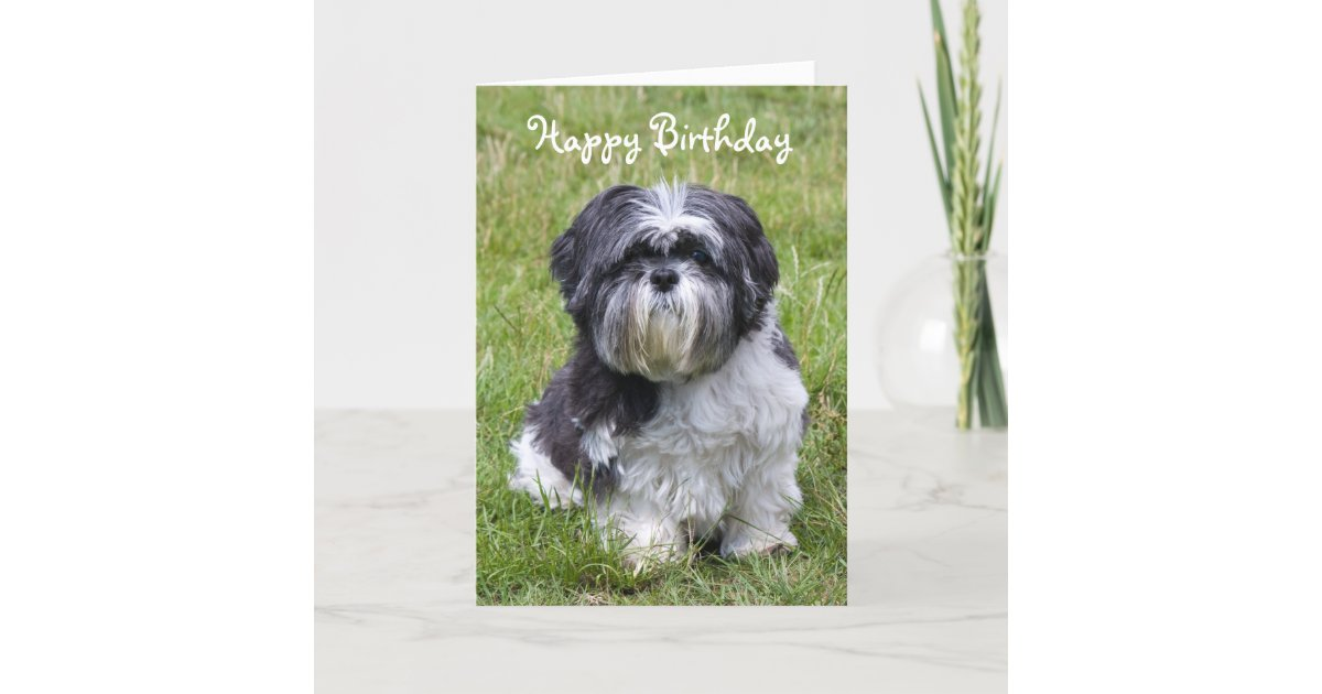 Shih Tzu dog cute happy birthday greeting card | Zazzle.co.uk