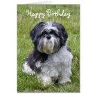 Shih Tzu dog cute happy birthday greeting card
