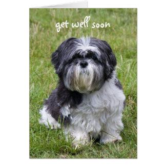 Shih Tzu dog cute photo get well greeting card