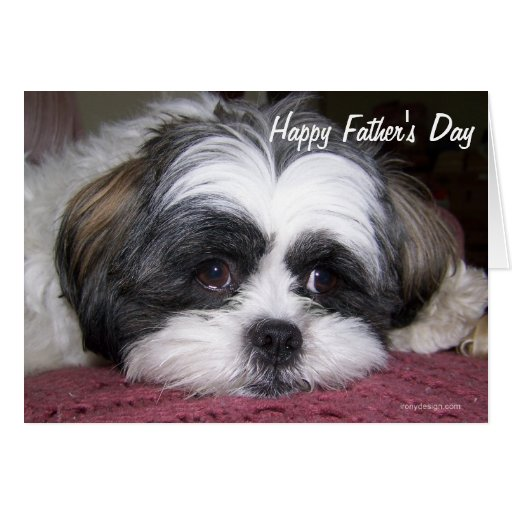 Shih Tzu Dog Father's Day Greeting Card