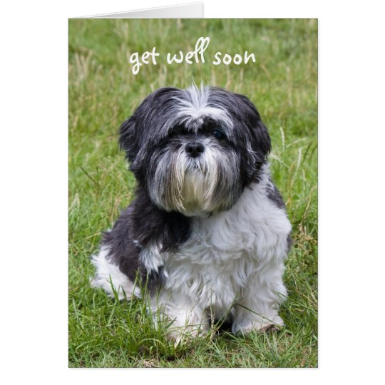 Shih Tzu dog get well soon greeting card