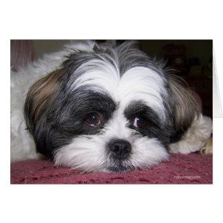Shih Tzu Dog Greeting Card