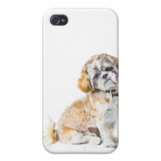 Shih Tzu Dog iPhone 4/4S Case