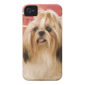 Shih-tzu dog iPhone 4 case