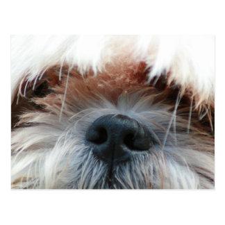 shih tzu dog puppy cute face picture gifts postcard