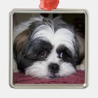Shih Tzu Dog Silver-Colored Square Decoration