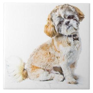 Shih Tzu Dog Tile/Trivet Large Square Tile