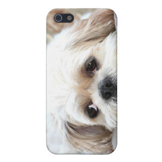 Shih Tzu face iPhone 5/5S Covers