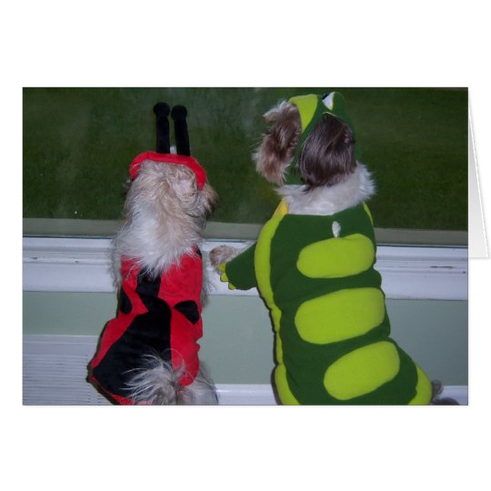 Shih Tzu Halloween Costume Greeting Card
