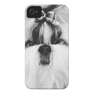 Shih Tzu iPhone 4 Cases