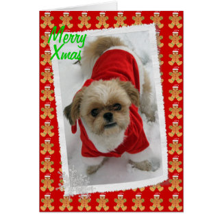 shih tzu lhasa tzu cute santa dog Christmas card