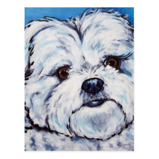 Shih Tzu mix Postcard