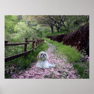 Shih Tzu Poster Purple Flowers