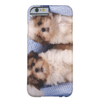 Shih Tzu puppies under a checked blanket Barely There iPhone 6 Case